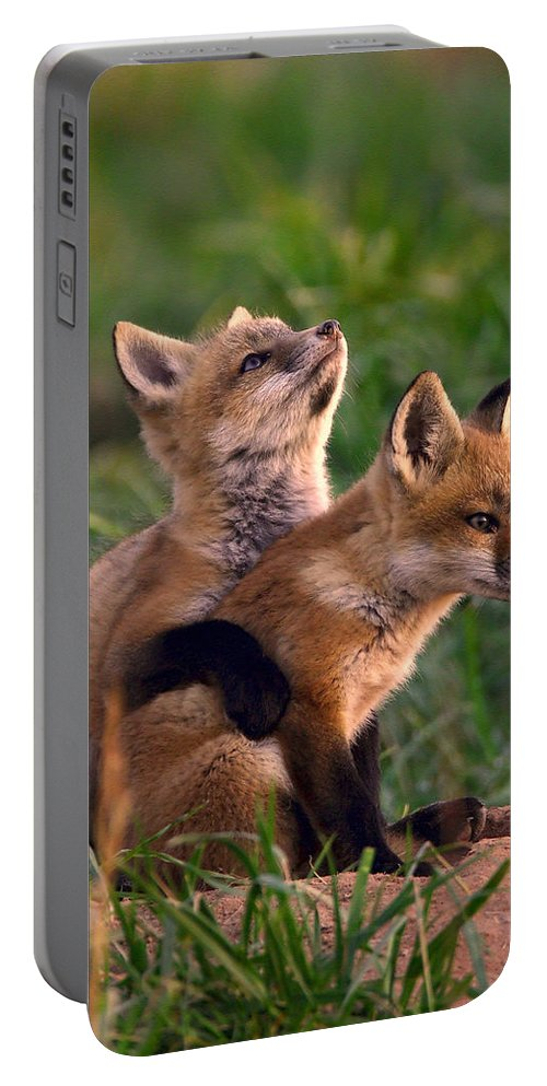 Fox Portable Battery Charger featuring the photograph Fox Cub Buddies by William Jobes