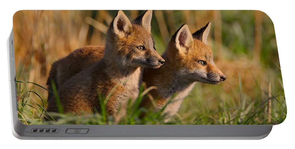 Fox Portable Battery Charger featuring the photograph Fox Cubs At Sunrise by William Jobes