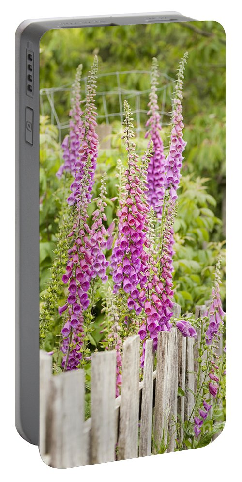 Foxglove Portable Battery Charger featuring the photograph Foxglove Fence by Anne Gilbert