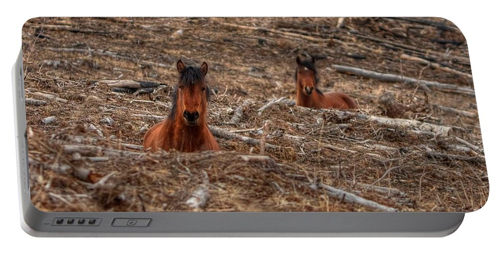 Wild Horse Portable Battery Charger featuring the photograph Foxhole Mustangs by James Anderson