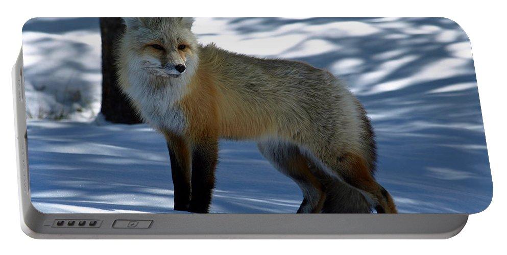 Fox Portable Battery Charger featuring the photograph Foxy Shadows by DeeLon Merritt