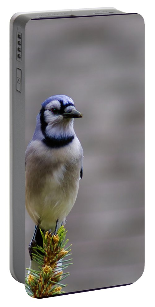 Bluejay Portable Battery Charger featuring the photograph Framed Bluejay by LeeAnn McLaneGoetz McLaneGoetzStudioLLCcom