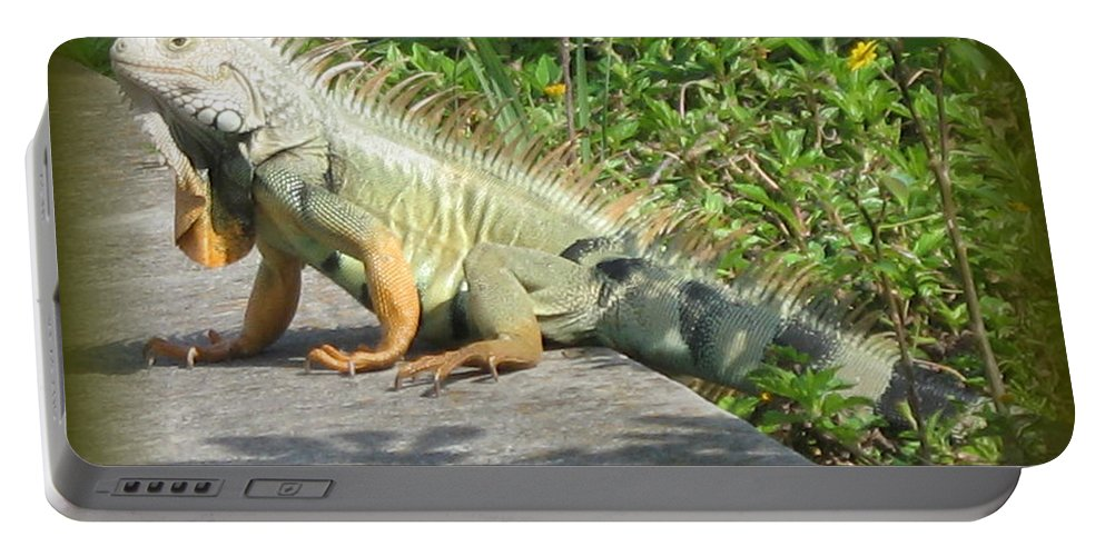 Iguana Portable Battery Charger featuring the photograph Framed Iguana by Christiane Schulze Art And Photography