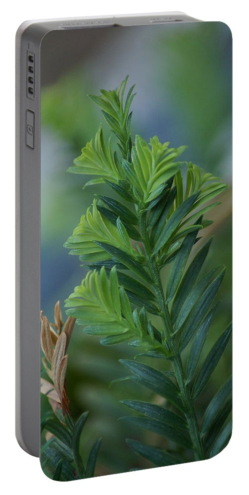 Redwood Portable Battery Charger featuring the photograph Fresh Growth Redwood by Ben Upham III