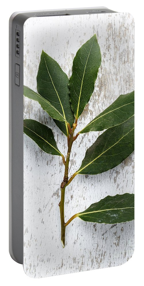 Lorel Portable Battery Charger featuring the photograph Fresh Laurel by Nailia Schwarz
