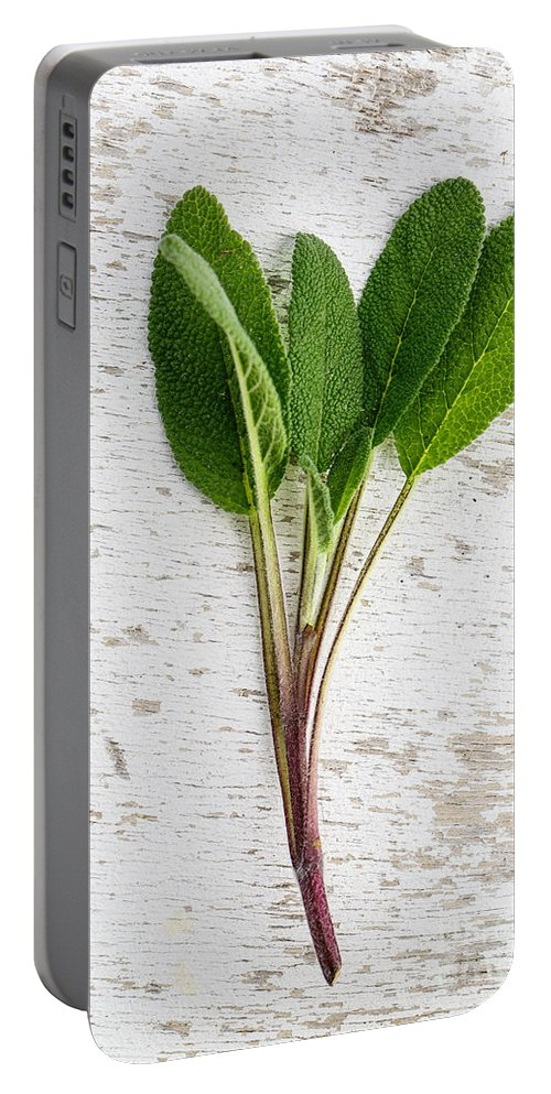Sage Portable Battery Charger featuring the photograph Fresh Sage by Nailia Schwarz
