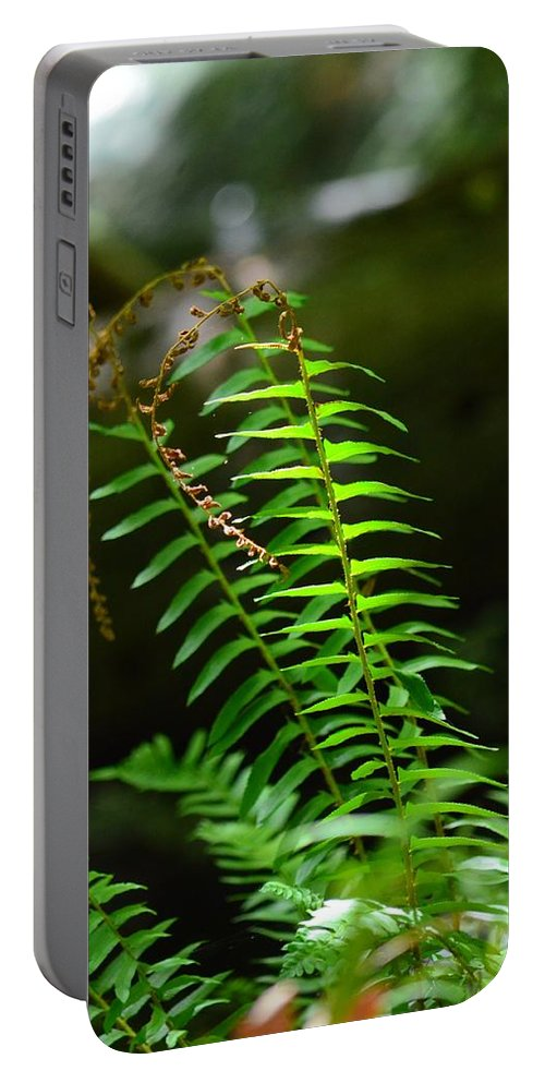From The Forest Floor Portable Battery Charger featuring the photograph From The Forest Floor by Maria Urso