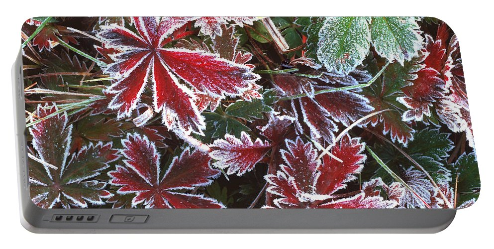 Strawberry Portable Battery Charger featuring the photograph Frost On Wild Strawberry by Rich Franco