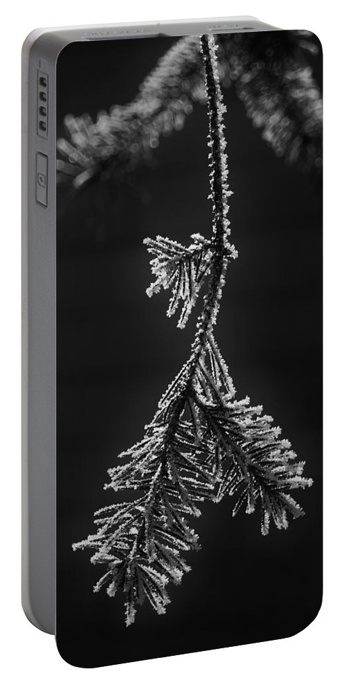 Pine Portable Battery Charger featuring the photograph Frosted Pine Branch by Daniel Thompson