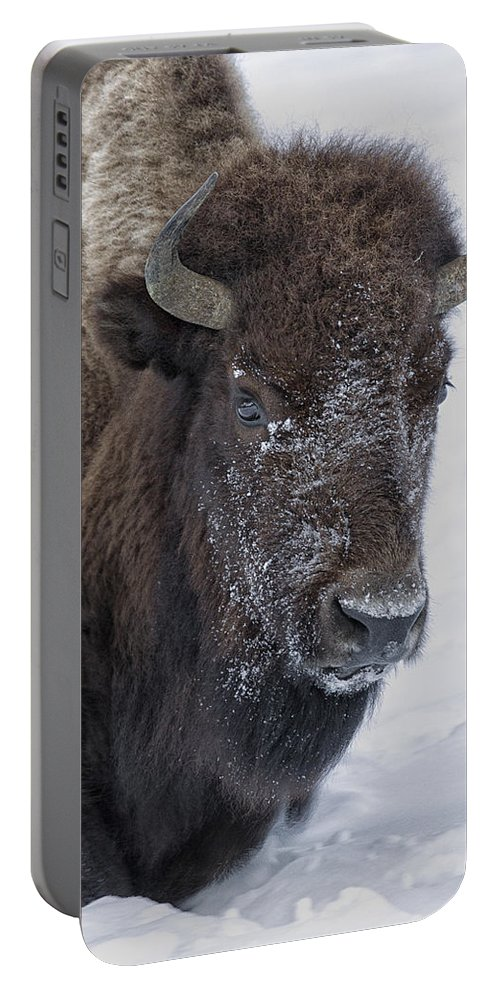 Bison Portable Battery Charger featuring the photograph Frosty Morning Bison by Elaine Haberland