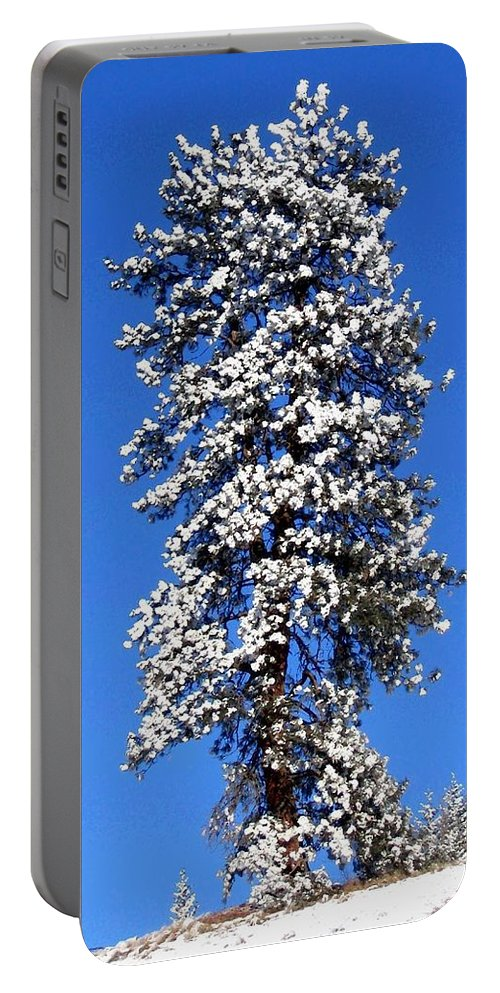 Frost Portable Battery Charger featuring the photograph Frosty Pine by Will Borden