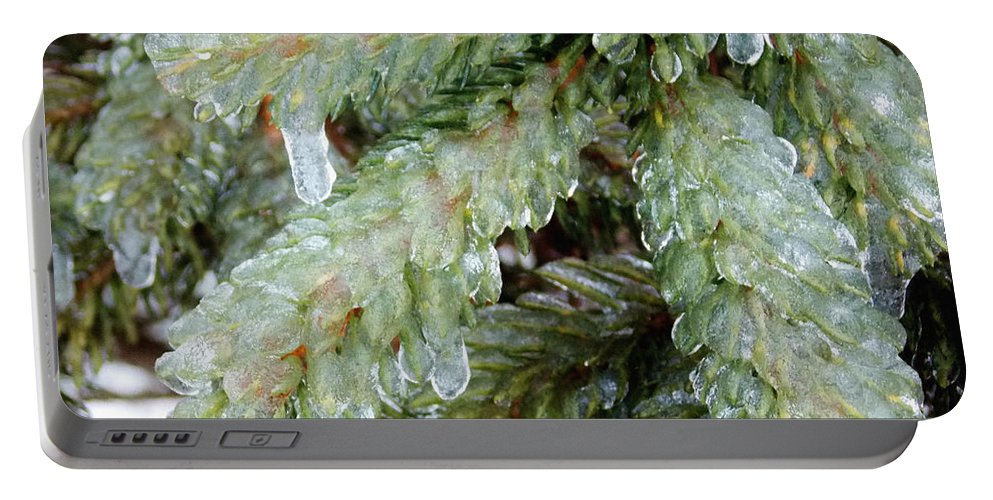 Pine Portable Battery Charger featuring the photograph Frozen Boughs by Shana Rowe Jackson