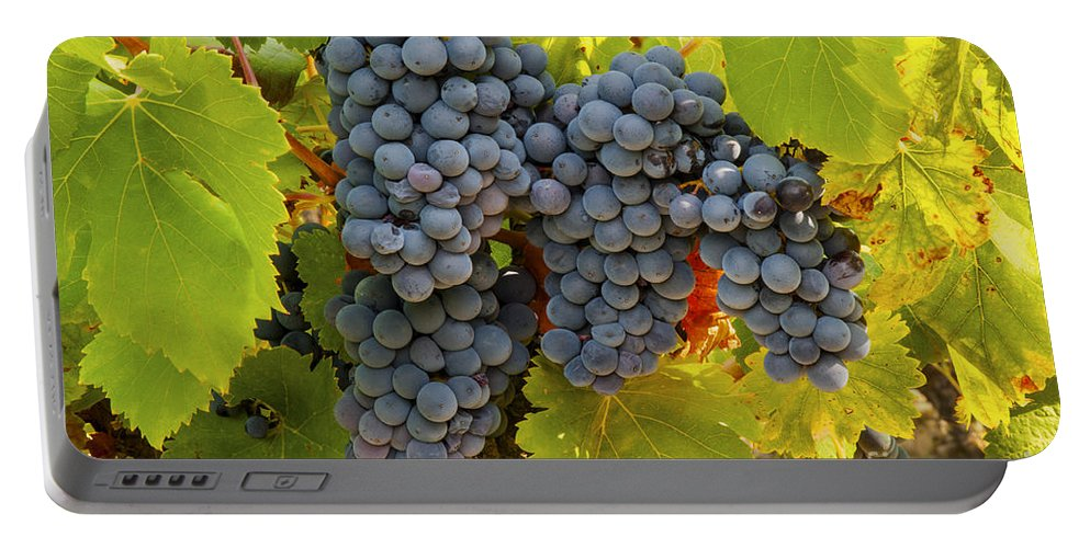 Saignon Portable Battery Charger featuring the photograph Fruit Of The Vine Imagine The Wine by Bob Phillips