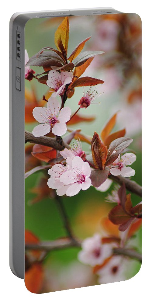Bloom Portable Battery Charger featuring the photograph Full Bloom by Frozen in Time Fine Art Photography