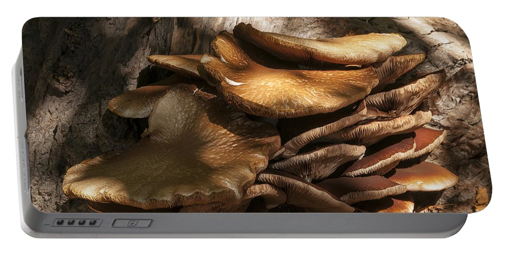 Les Alyscamps Cemetery Arles France Fungi Fungus Mushroom Mushrooms Nature Provence Portable Battery Charger featuring the photograph Fungi by Bob Phillips