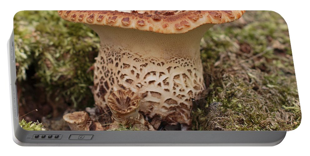 Fungi Portable Battery Charger featuring the photograph Fungi Wearing Lace by Barbara McMahon