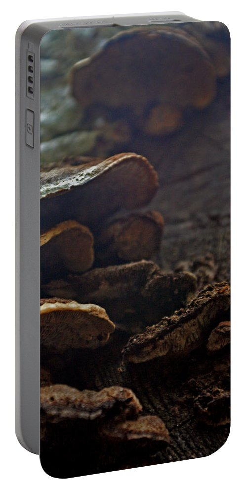 Fungus Portable Battery Charger featuring the photograph Fungus 11 by Allan Lovell