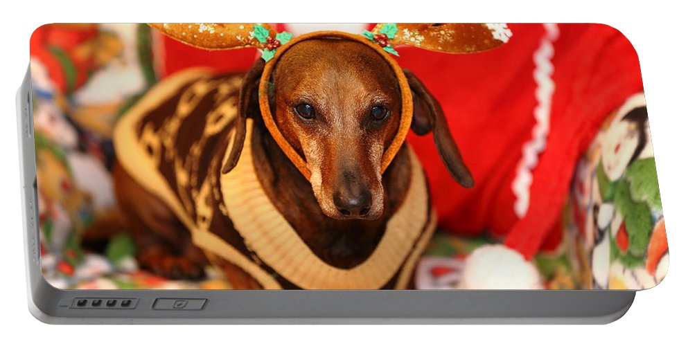 Reindeer Portable Battery Charger featuring the photograph Funny Looking Reindeer by Scott Hill