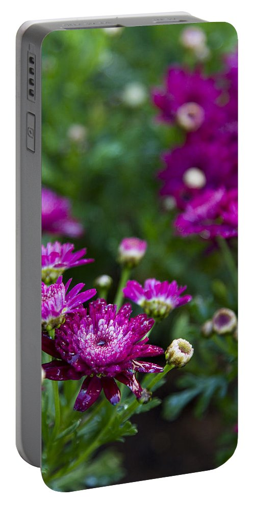 Fuschia Mums Portable Battery Charger featuring the photograph Fuschia Mums 2 by Jessica Velasco