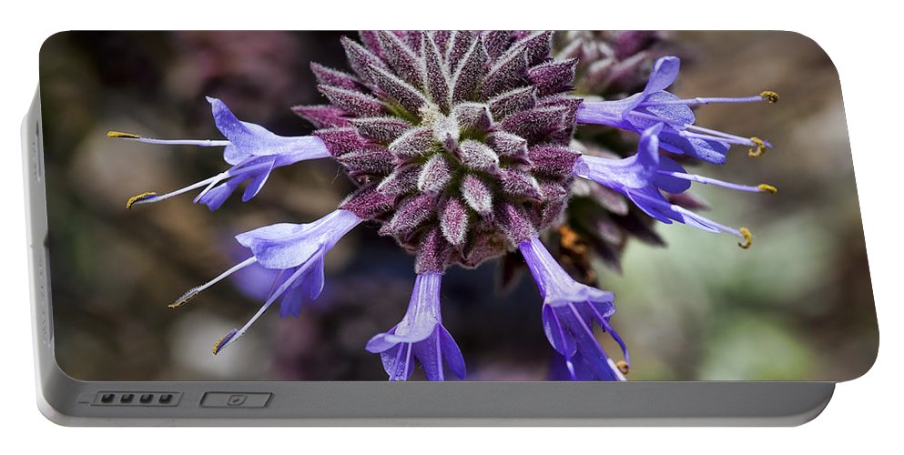 Lavender Flowers Portable Battery Charger featuring the photograph Fuzzy Purple 2 by Kelley King