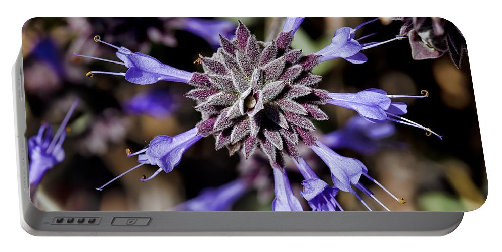 Fuzzy Portable Battery Charger featuring the photograph Fuzzy Purple 3 by Kelley King