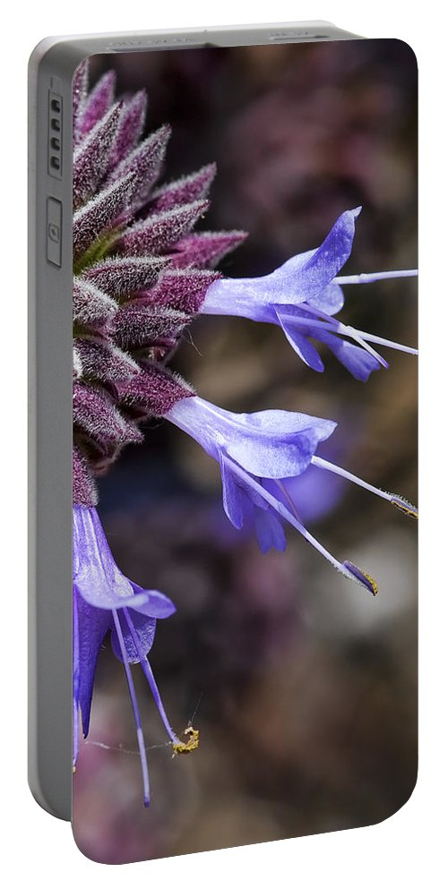 Macro Flowers Portable Battery Charger featuring the photograph Fuzzy Purple Detail 2 by Kelley King