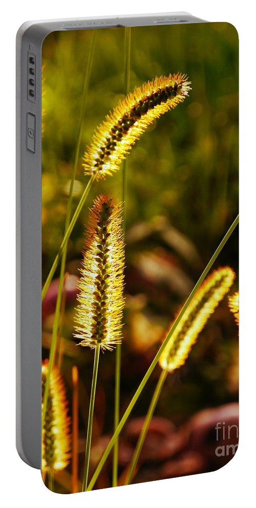 Grass Portable Battery Charger featuring the photograph Fuzzy Wuzzy by Beth Ferris Sale