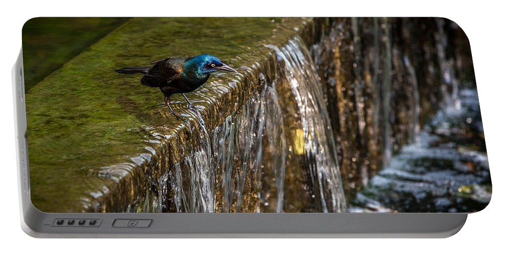Common Gackle Portable Battery Charger featuring the photograph Gackle 3 by Sennie Pierson