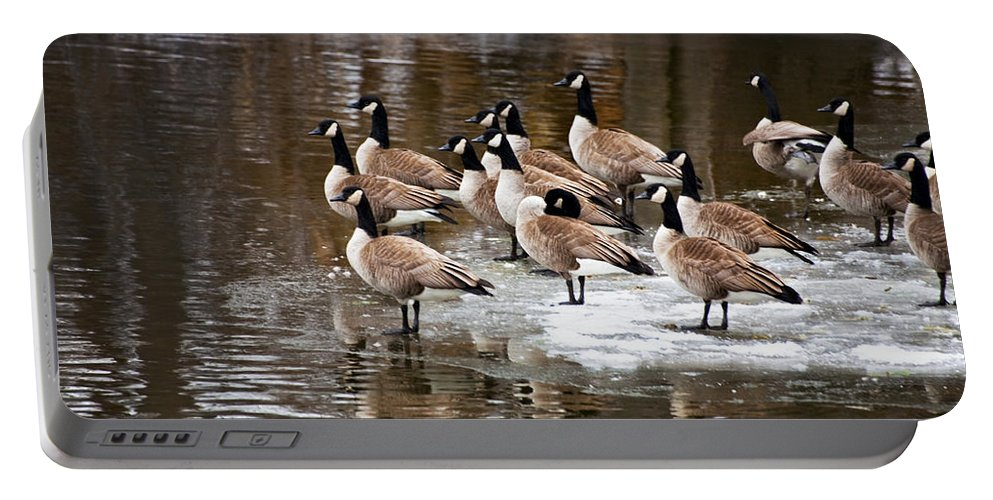 Geese Portable Battery Charger featuring the photograph Gaggle by Jeff Klingler