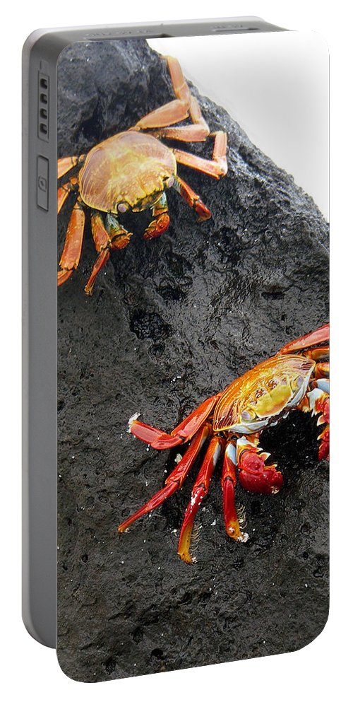 Galapagos Portable Battery Charger featuring the photograph Galapagos Islands 02 by Jeff Brunton