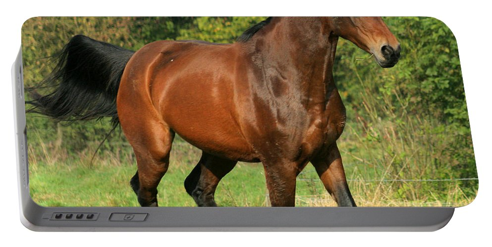 Horse Portable Battery Charger featuring the photograph Gallop by Angel Ciesniarska