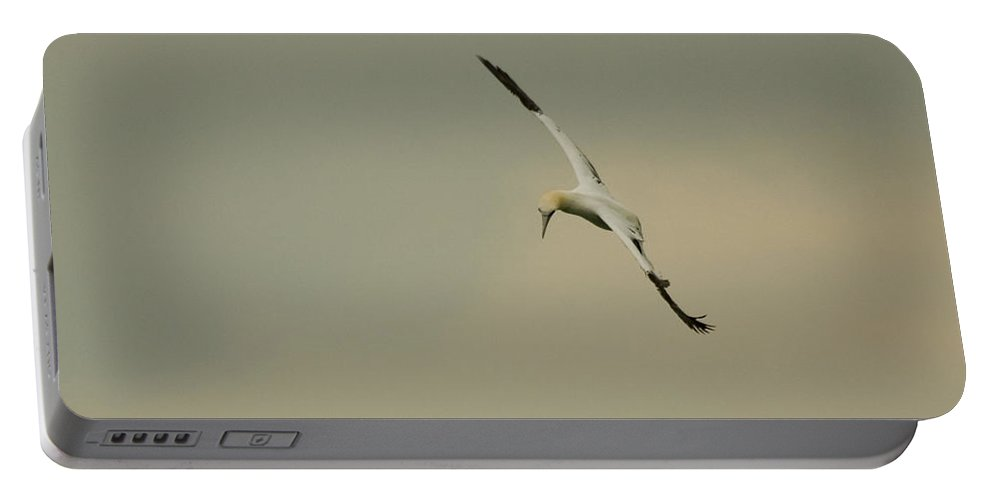 Northern Gannet Portable Battery Charger featuring the photograph Gannet by Sandy Swanson