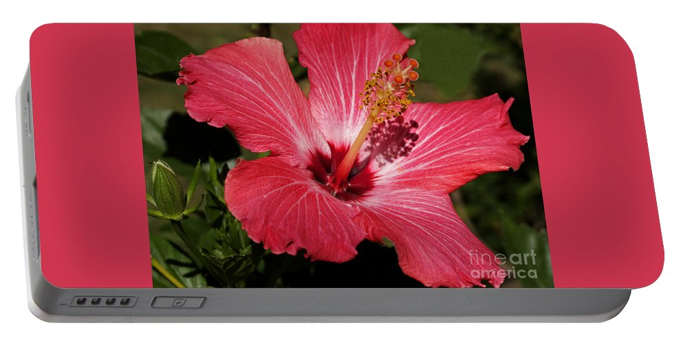 Hibiscus Portable Battery Charger featuring the photograph Garden Beauty by Ann Horn