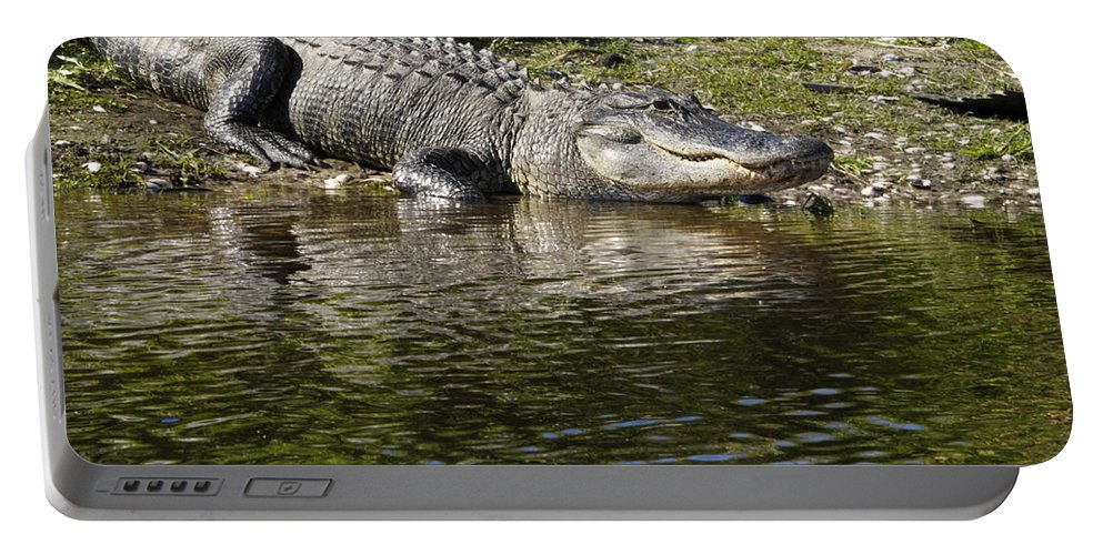 American Alligator Resting Portable Battery Charger featuring the photograph Gator Smile by Sally Weigand