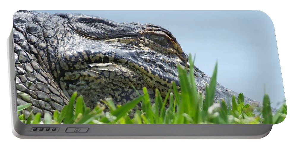 Alligator Portable Battery Charger featuring the photograph Gator Watching by Lizi Beard-Ward
