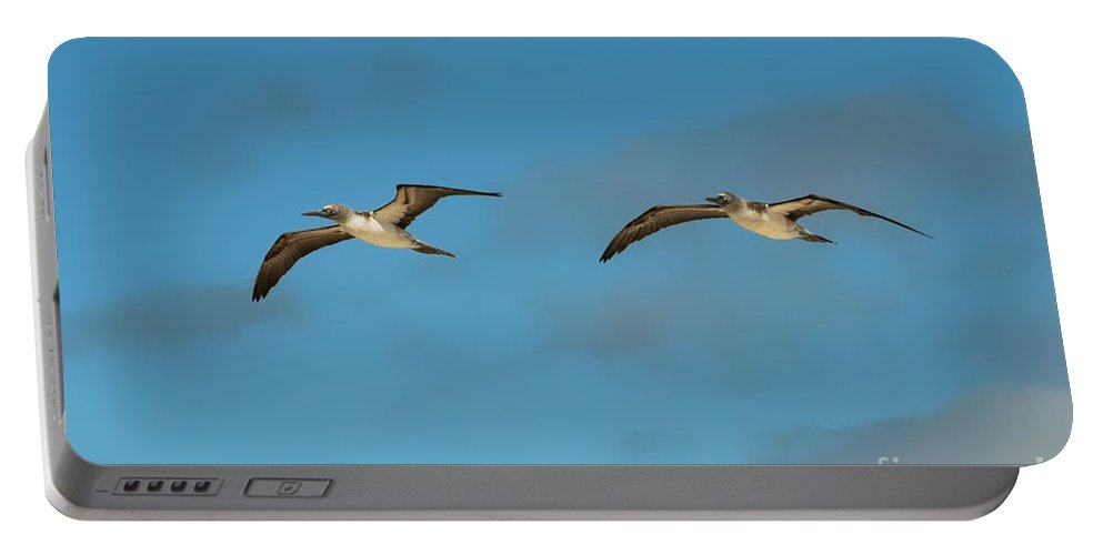 Seymour Island Galapagos Islands Ecuador Blue Footed Booby Bootbes Bird Birds Twins Two Of A Kind Animal Animals Creature Creatures Portable Battery Charger featuring the photograph Gemelos by Bob Phillips