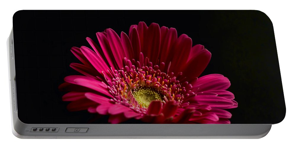 Gerbera Daisy Portable Battery Charger featuring the photograph Gerbera Daisy 2 by Steve Purnell
