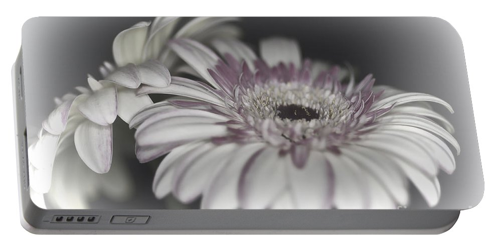 Pink Gerbera Flower Portable Battery Charger featuring the photograph Gerbera Dream 1 by Steve Purnell