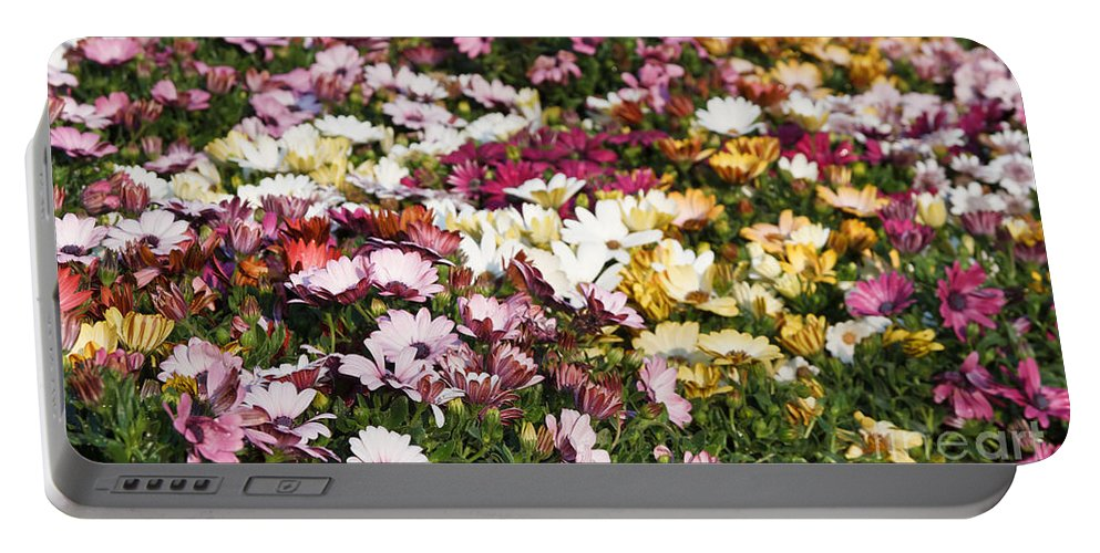Background Portable Battery Charger featuring the photograph Gerbera Flowers by Antonio Scarpi