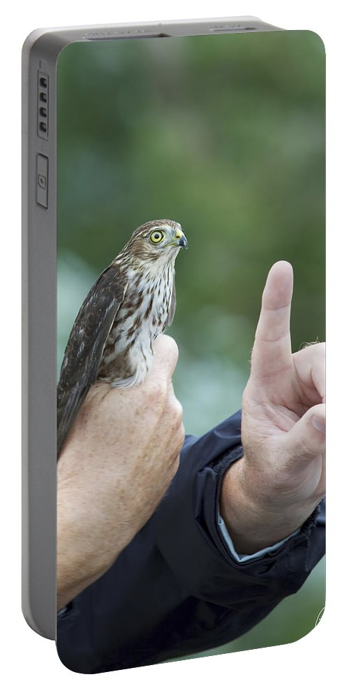 Accipiter Striatus Portable Battery Charger featuring the photograph Getting The Finger by Phill Doherty
