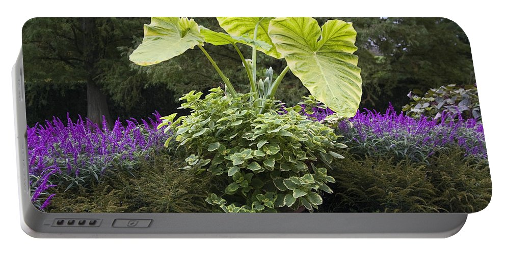 Garden Scene Portable Battery Charger featuring the photograph Giant Elephant Ears by Sally Weigand