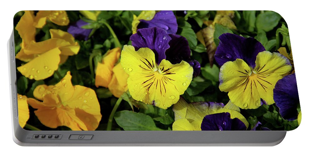 Pacific Northwest Portable Battery Charger featuring the photograph Giant Garden Pansies by Ed Riche