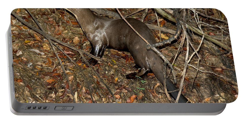 Giant River Otter Portable Battery Charger featuring the photograph Giant River Otter by Gregory G. Dimijian, M.D.