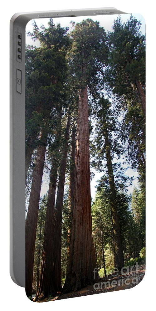 Sequoia Grove Portable Battery Charger featuring the photograph Giant Sequoias - Yosemite Park by Christiane Schulze Art And Photography