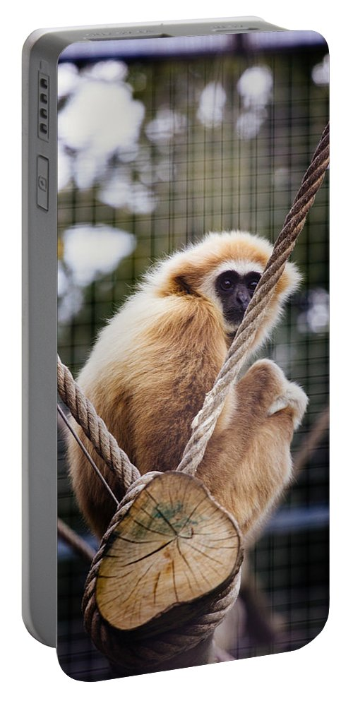 Animal Portable Battery Charger featuring the photograph Gibbon On A Swing by Pati Photography