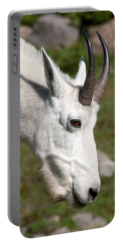 Glacier Portable Battery Charger featuring the photograph Glacier Goat by Steve Stuller