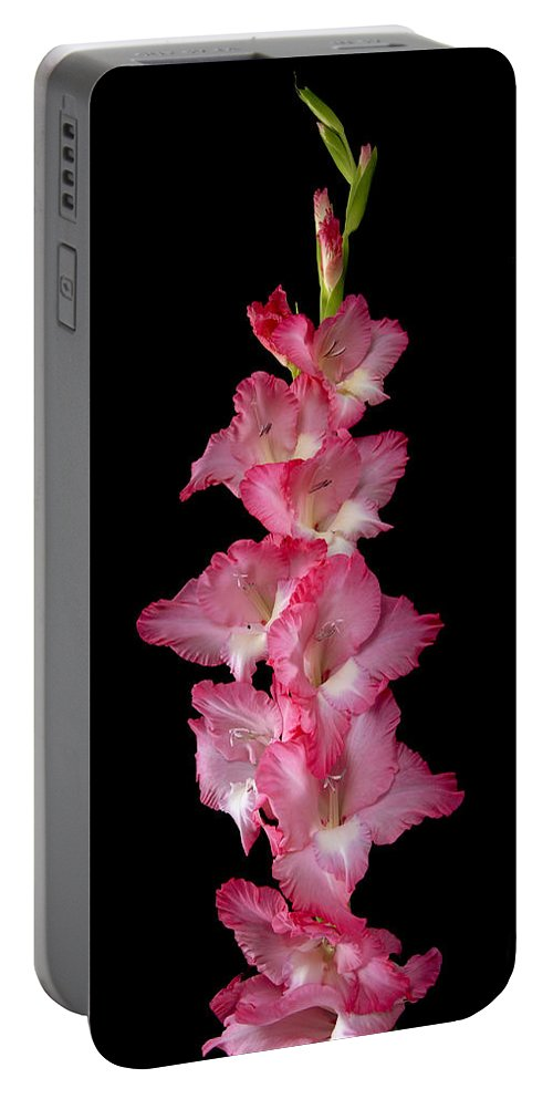 Gladiolus Portable Battery Charger featuring the photograph Gladiolus by Timothy Loyd