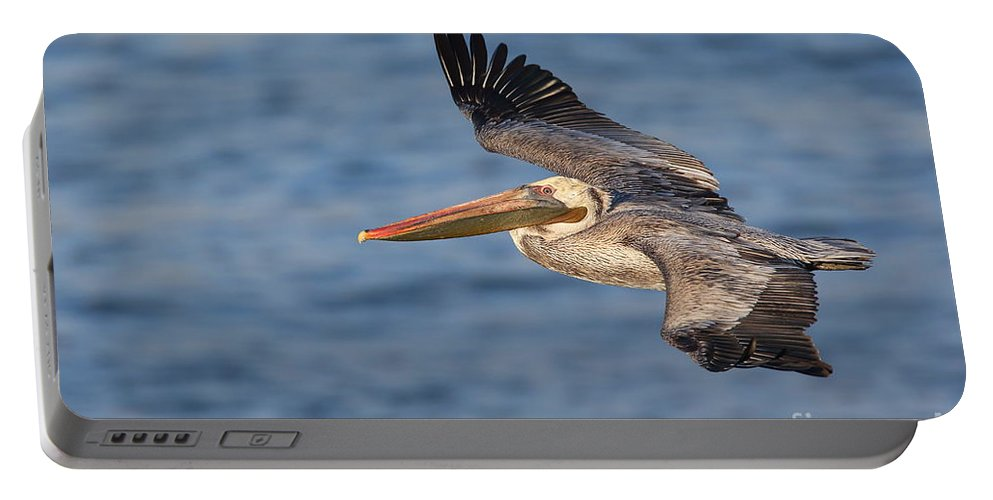 Pelican Portable Battery Charger featuring the photograph gliding by Pelican by Bryan Keil