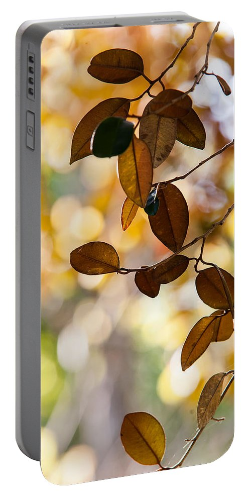 Jenny Rainbow Fine Art Photography Portable Battery Charger featuring the photograph Glorious Foliage. Tree In Pamplemousse Garden 1. Mauritus by Jenny Rainbow