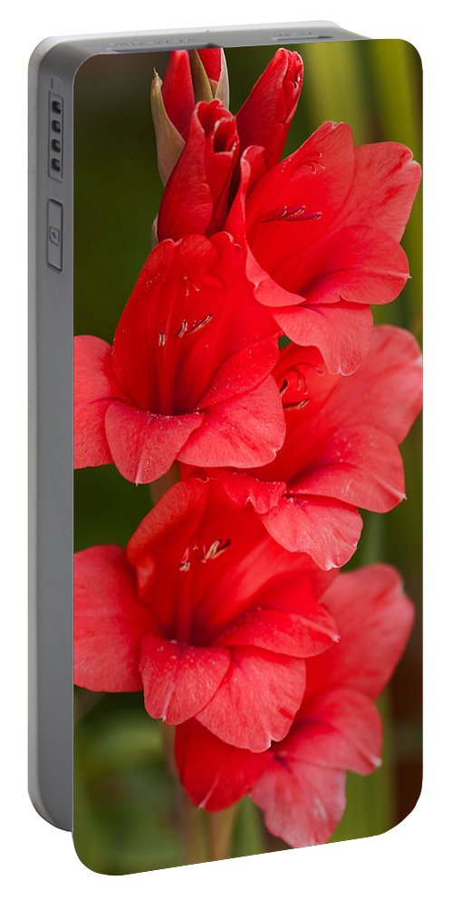 Flower Portable Battery Charger featuring the photograph Glorious Glads by Lindley Johnson